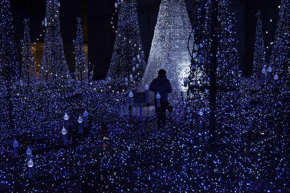 Рождественские елки и предновогодние огни по всему миру