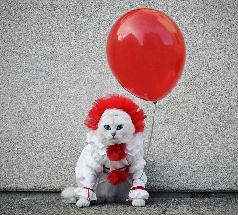 Забавные котики и пёсики поднимают настроение