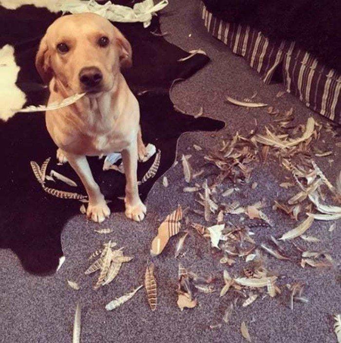 Собаки, которые были пойманы на месте преступления