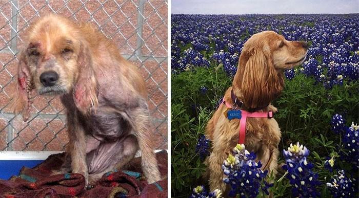 16 историй спасения собак, находящихся на грани смерти