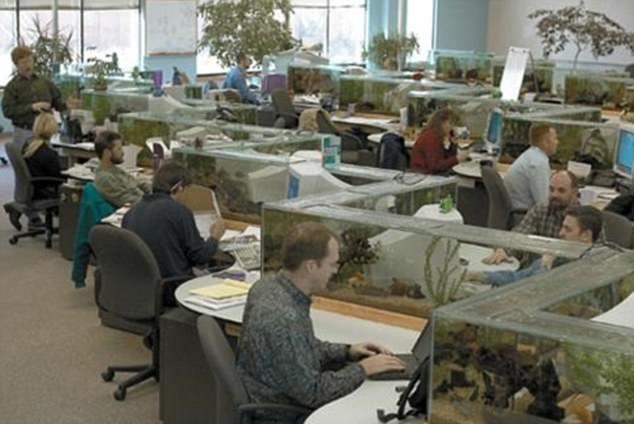 Работа в офисе с оригинальными рабочими местами