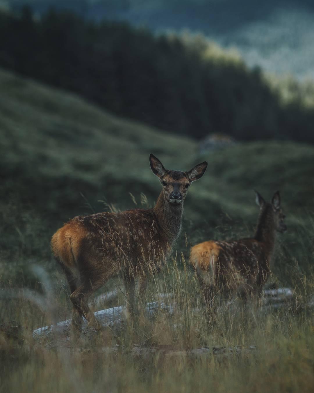 Животные и природа на снимках Ремо Якобса