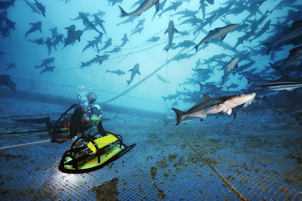Обитатели подводного мира на снимках Брайана Скерри