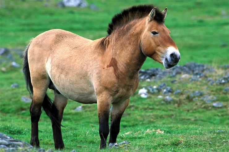 Самые редкие животные на планете