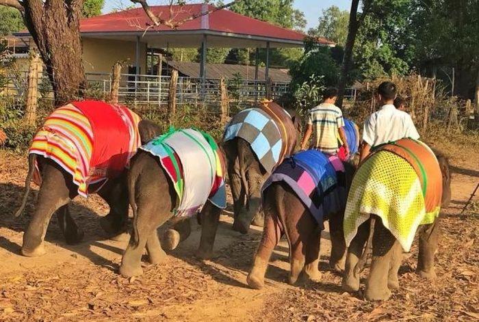 Яркие теплые одеяла для замерзающих слонят