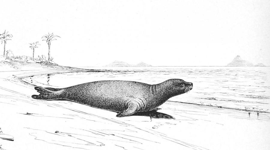 10 исчезнувших видов животных, которых скоро возродят