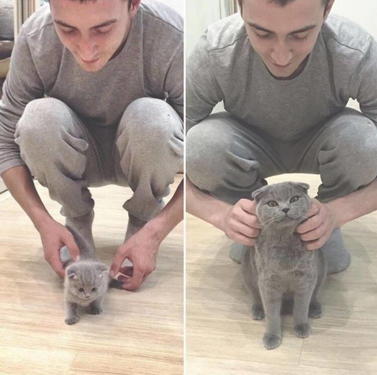Котята очень быстро растут: до и после