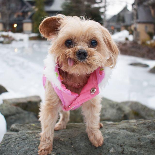 Спасение щенка найденного на улице