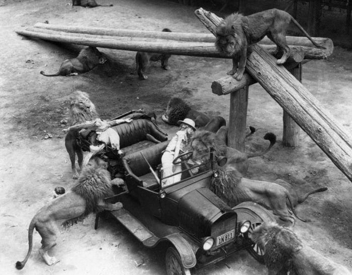 Винтажные снимки львиной фермы в Калифорнии