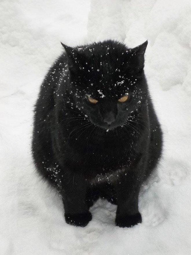 Кошки увидели свой первый снег