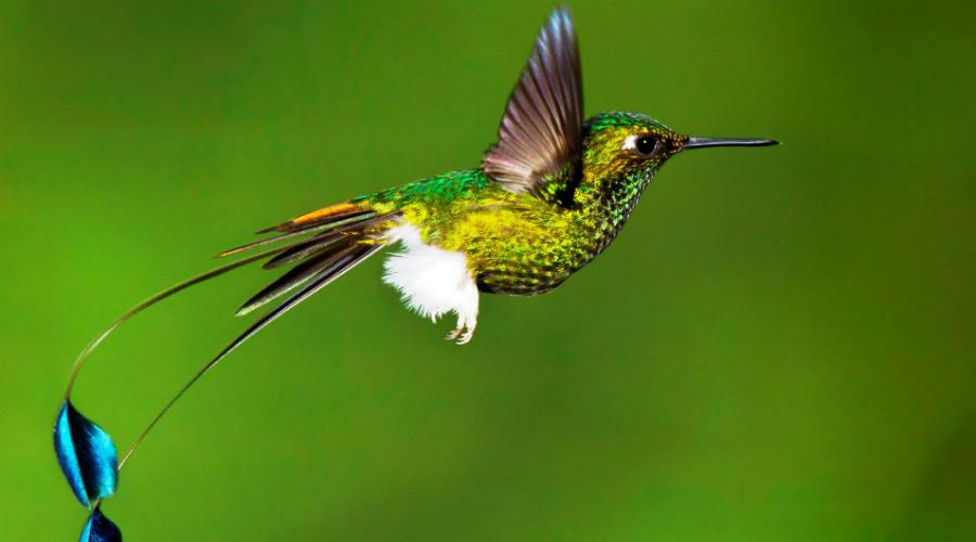 Удивительные создания нашей планеты