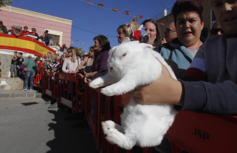 Благословение домашних животных в День святого Антония