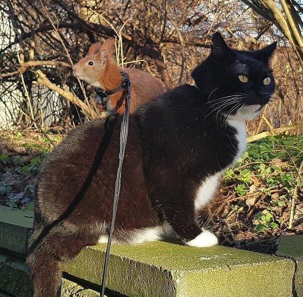 Неразлучные друзья: бельчонок и кот
