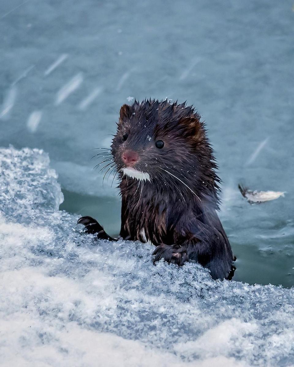 Портреты животных Финляндии от Осси Сааринена