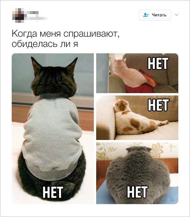 Смешные твиты от людей с хорошим чувством юмора