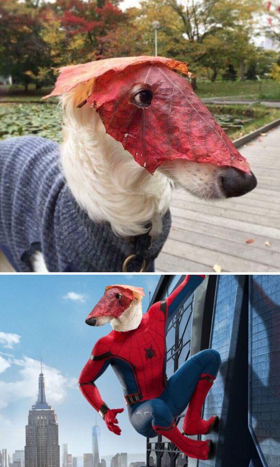 Забавные работы от мастеров фотошопа