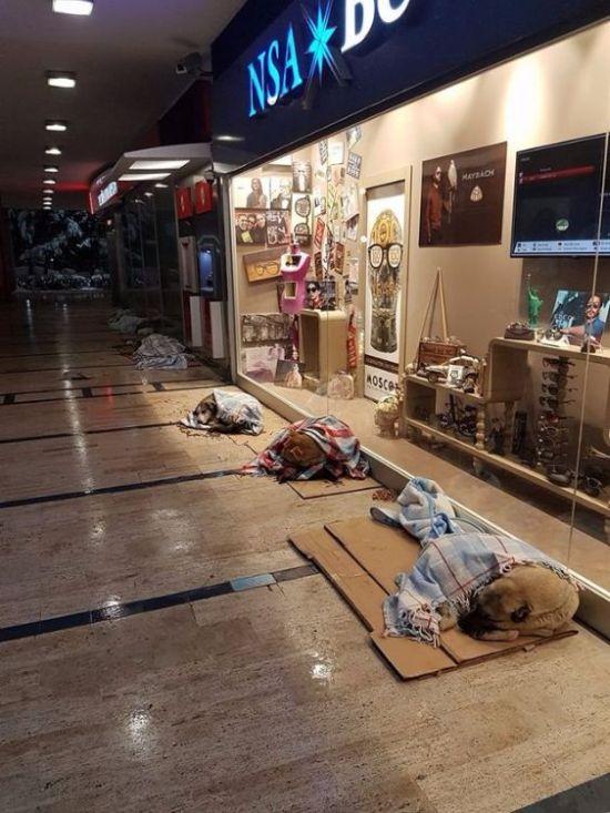 В Стамбуле помогают согреться бездомным животным