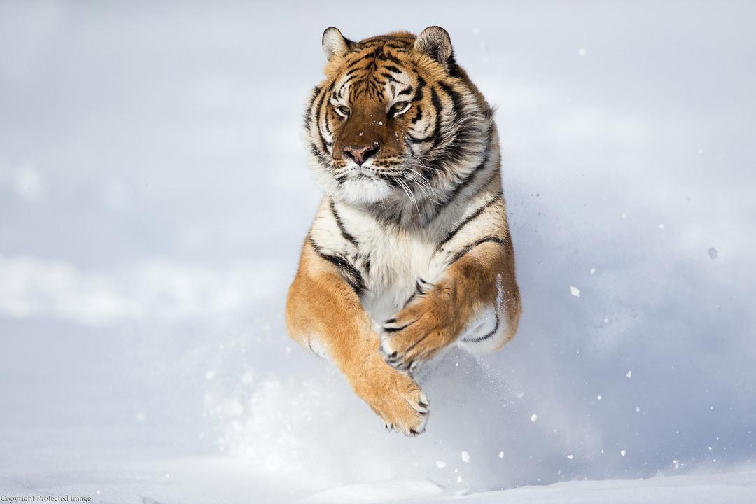 Портреты диких животных от Serhat Demiroglu