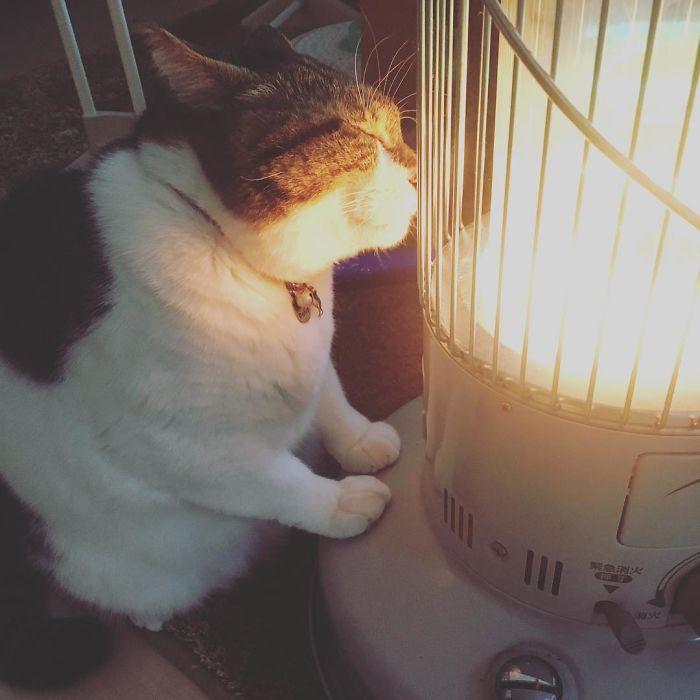 Бывший бродячий кот тащится от обогревателя