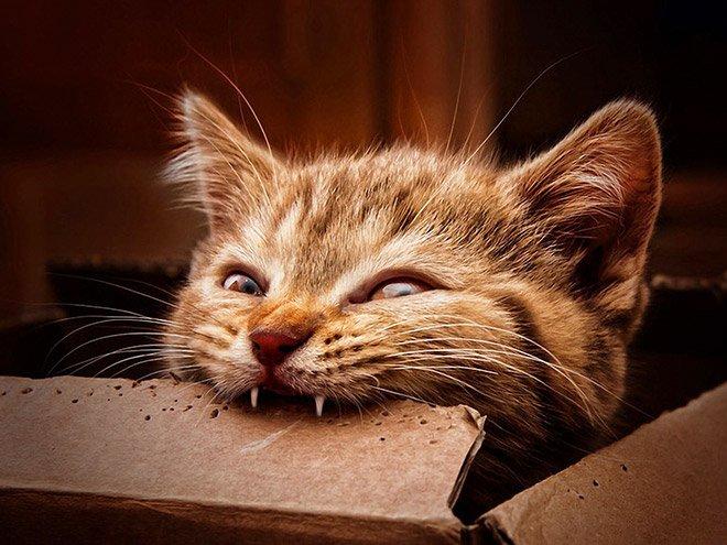 Котики любят делать кусь