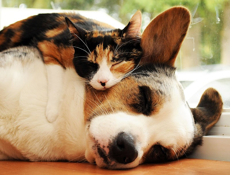 Животные разных видов спят в обнимку