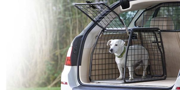 Собаки и шокирующий поход к ветеринару