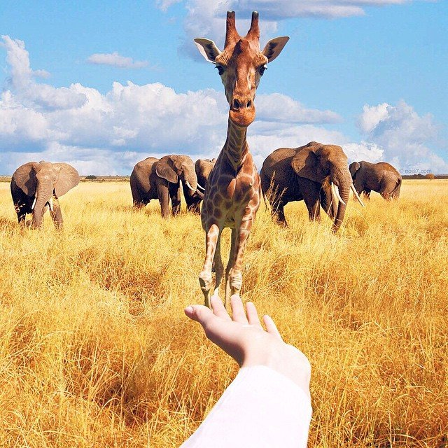 Фотоманипуляции з тваринами від Роберта Янса