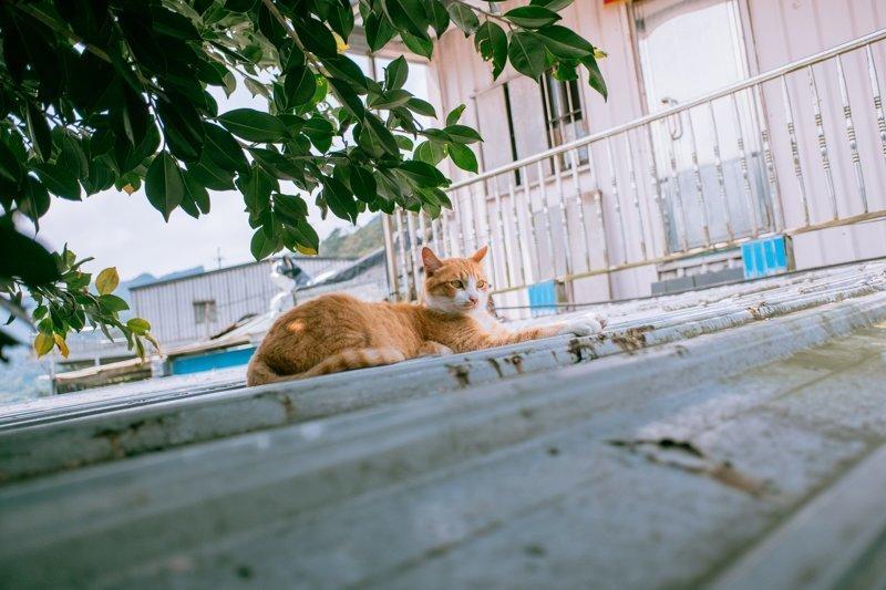 Тайваньский фотограф снимает колоритных уличных котов