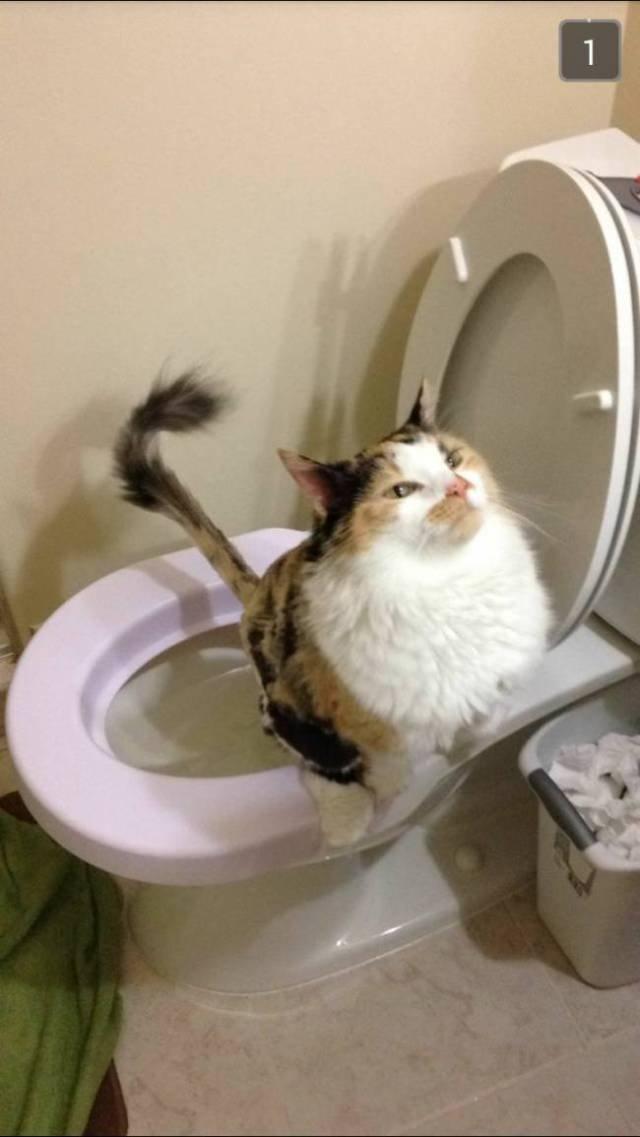 Забавні емоції домашніх тварин