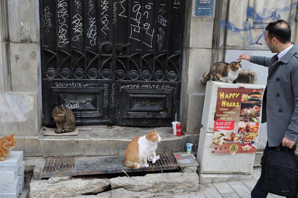 Жизнь котов на улицах Стамбула