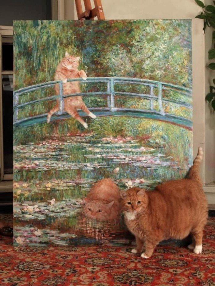 Эти кошки так похожи на людей