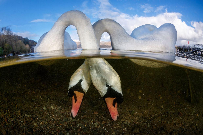 Невероятные снимки победителей конкурса подводной фотографии