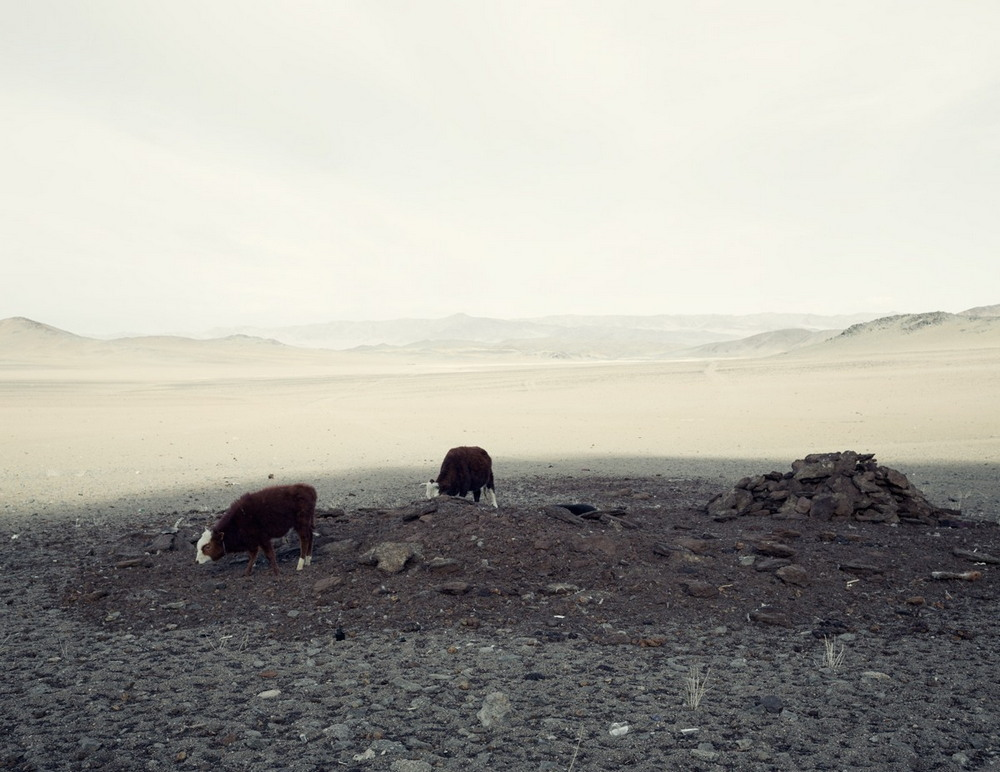 О жизни в Монголии от австралийского фотографа