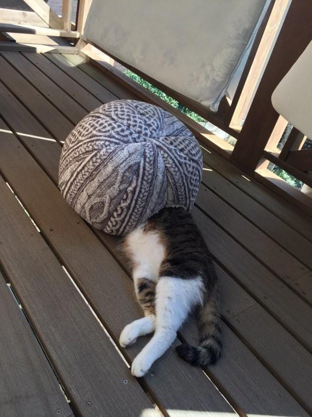 Забавные животные спят в необычных местах и позах
