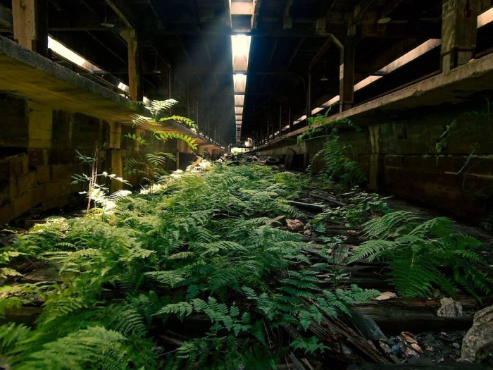 Заброшенные места, которые были отвоёваны природой