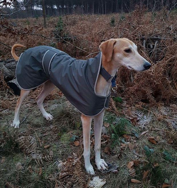 Спасенная собака набрала недостающие килограммы