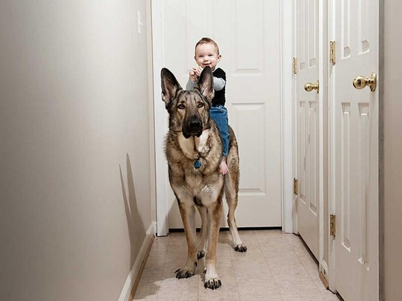 Хочу быть таким человеком, каким меня считает моя собака