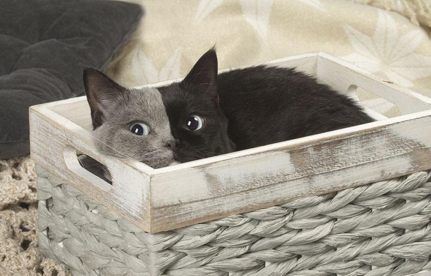 Кошка с двойным лицом