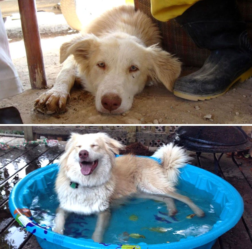 Собаки взятые из приюта: до и после