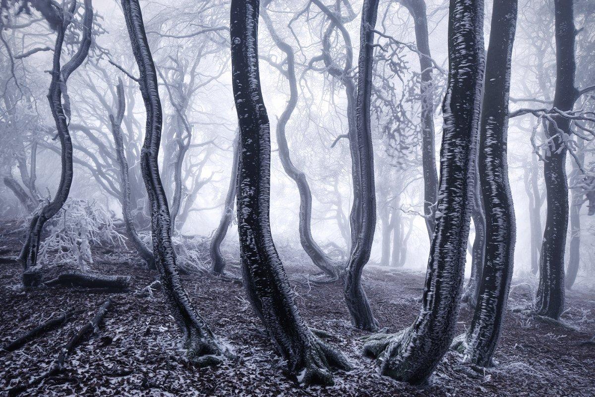 Красота заснеженных лесов от Килиана Шёнбергера