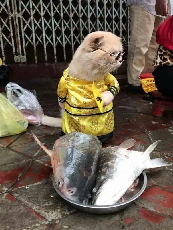Очаровательный мохнатый продавец рыбы во Вьетнаме