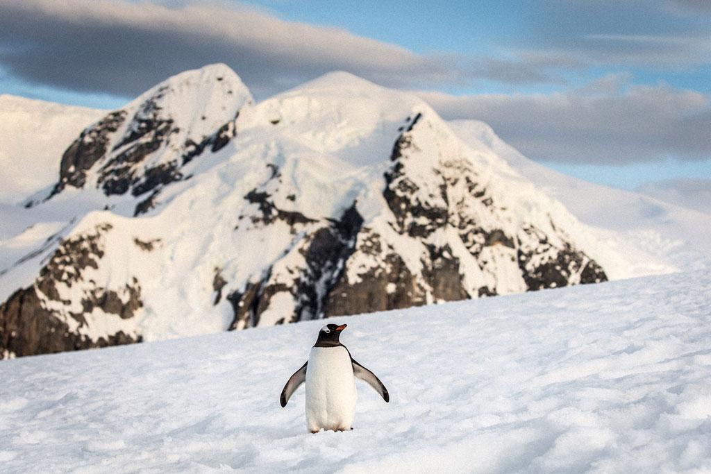 Синие айсберги в фотографиях Алекса Корнелла