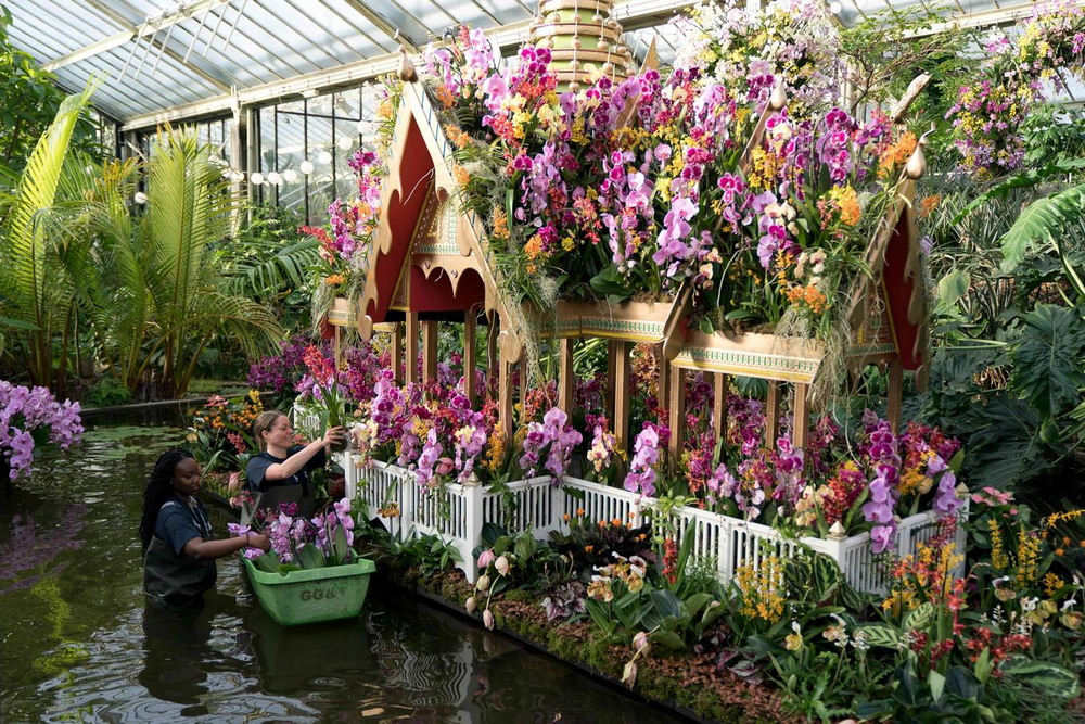 Фестиваль орхидей в Лондоне