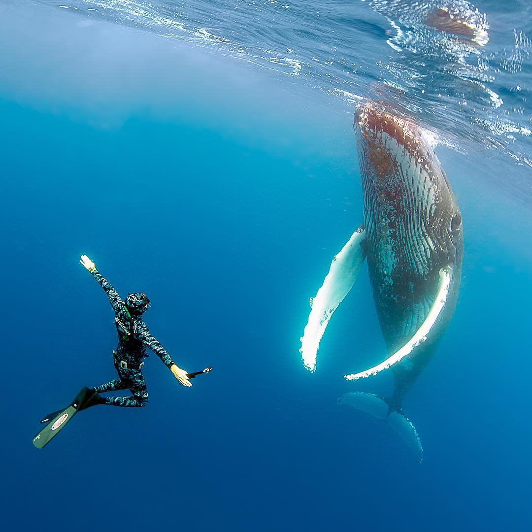 Захватывающие подводные фотографии от Нади Али