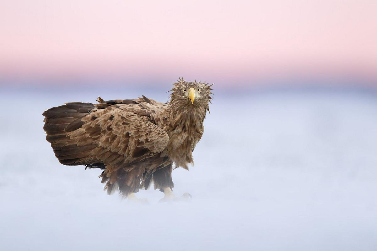 Лучшие фотографии птиц с конкурса Bird Photographer of the Year 2018