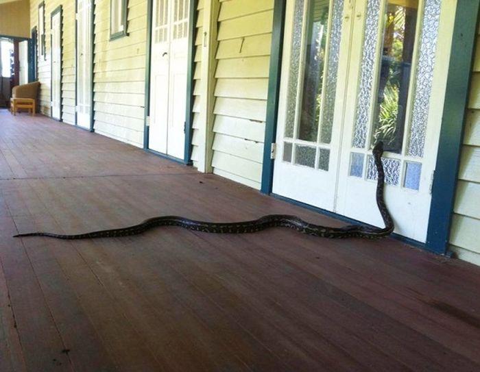 Змеи: путешествие в Австралию отменяется