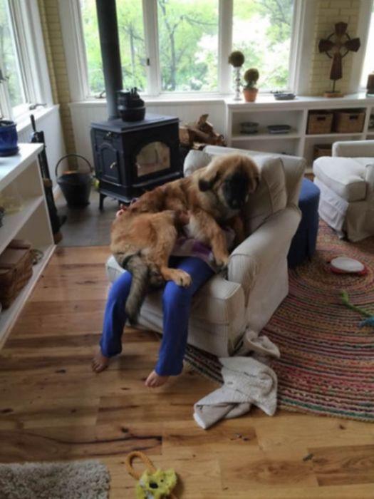 Наглые собаки позволяют себе что хотят