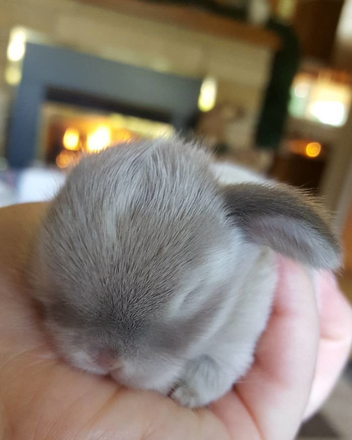 Милые крольчата, которые помещаются в ладони