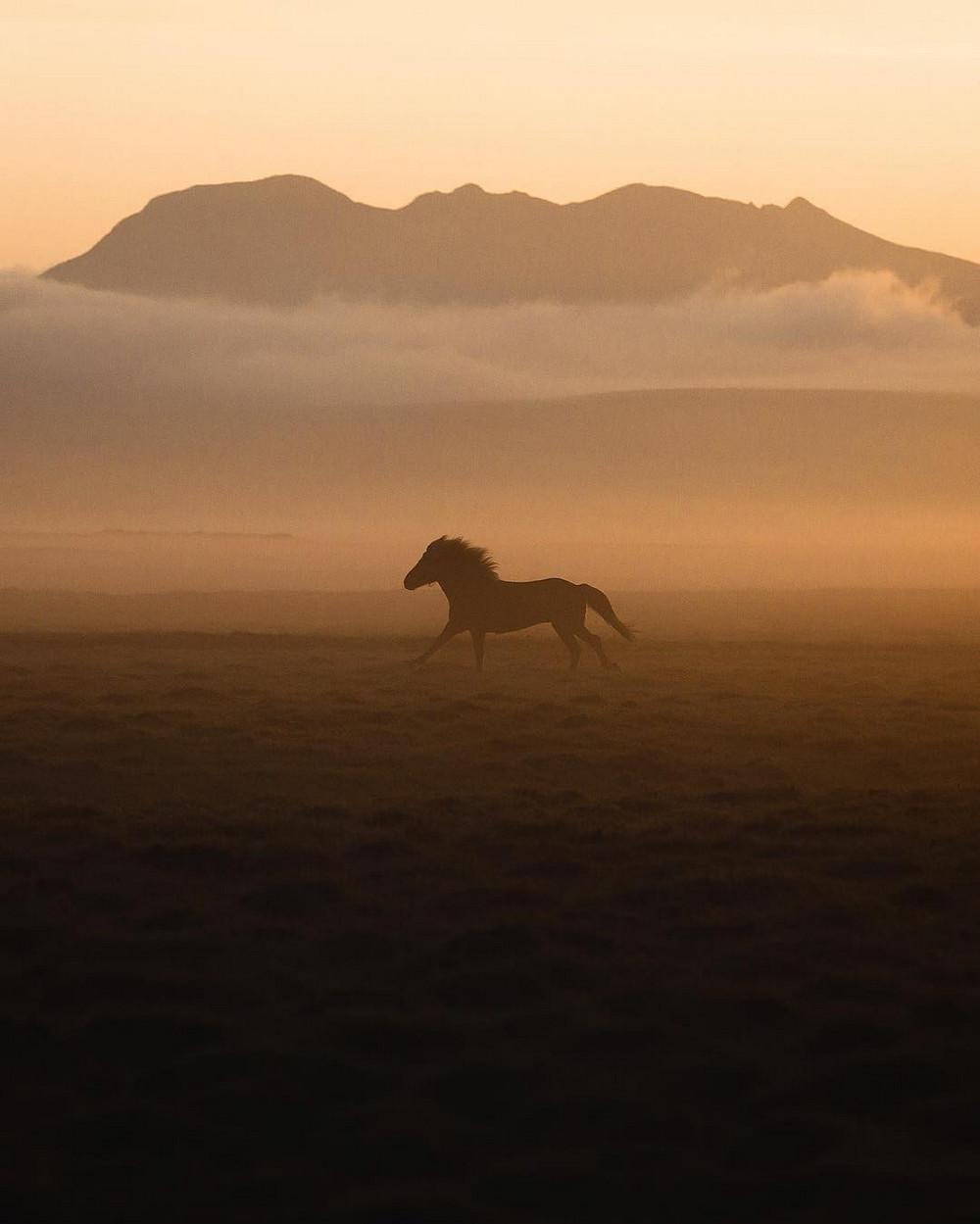 Животные и природа в фотографиях Донала Бойда