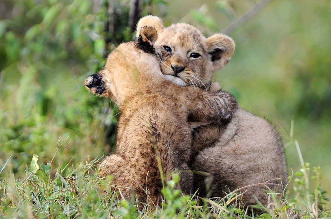 Милые обнимашки братьев наших меньших